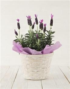 flowers: Sweet Devotion!