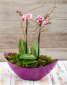 gifts: Orchids in a Boat!