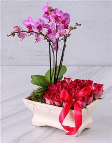 plants: Tickle Me Pink!