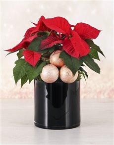 flowers: Festive Christmas Poinsettia!