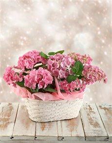 flowers: Double Pink Hydrangea Basket!
