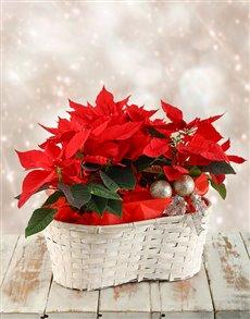 flowers: Triple Poinsettia Basket!