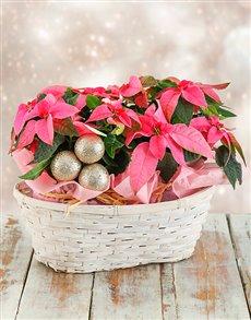 flowers: Double Christmas Poinsettia Basket!