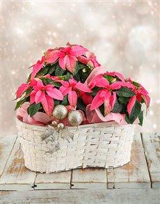 flowers: Triple Christmas Poinsettia Basket !
