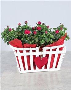 flowers: Box of Love Rose Box!