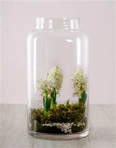 flowers: White Hyacinths in a Terrerium Vase!