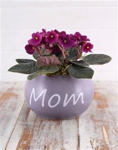 plants: African Violets for Mom!