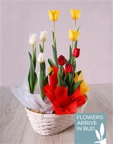 flowers: Trio of Tulips in Basket!