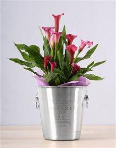 gifts: Pink Zantedeschia Ice Bucket!