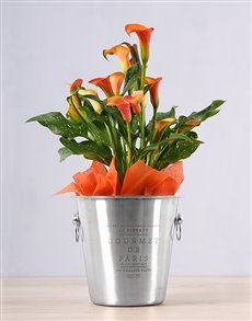 flowers: Orange Zantedeschia Ice Bucket!