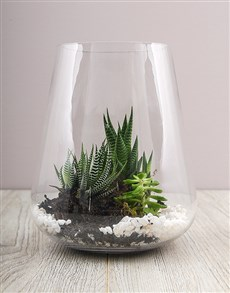 flowers: Cacti and Succulents in Tall Vase!