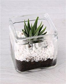 plants: Glass Vase with a Petite Succulent!