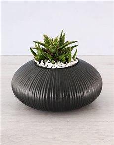 flowers: Aloe Trend Setter Plant!