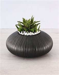 plants: Aloe Trend Setter Plant!