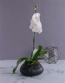 flowers: Phalaenopsis Orchid in Gunmetal Vase!