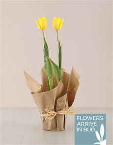 gifts: Yellow Tulip Plant in Craft Paper!