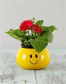 flowers: Mini Gerbera in a Smiley Pot!