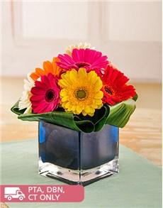 flowers: Colourful Gerberas in Blue Vase!
