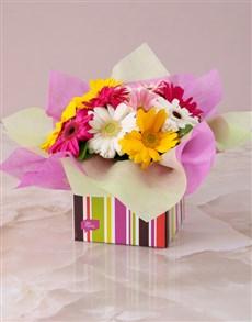 gifts: Mixed Mini Gerberas in a Stripe Box!