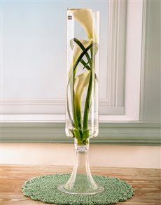 gifts: Serene Simplicity Lily Arrangement!