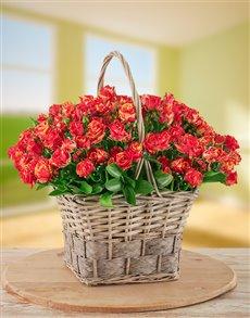 flowers: Variegated Kenyan Cluster Roses in a Basket!