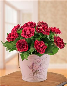 flowers: Pink Abracadabra Rose Arrangement!