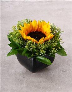 flowers: Sunflower In Black Ceramic Vase!