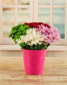 flowers: Daisies in a Pail!