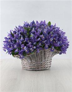 flowers: 100 Irises in a Basket!