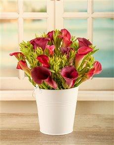 flowers: Buckets of Love Arum Arrangements!