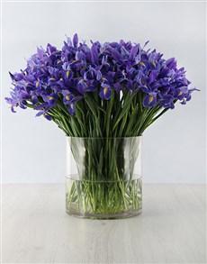 gifts: 100 Irises in a Vase Arrangement!