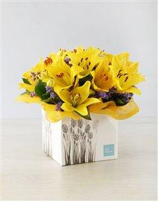 flowers: Yellow Asiflorum Lily Sunshine Box!
