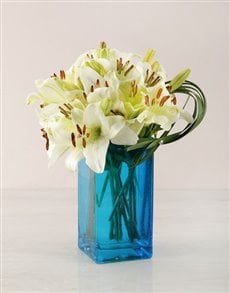 gifts: White Asiflorum Lily and Leriopi Vase!