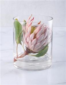 flowers: King Protea in Short Cylinder Vase!