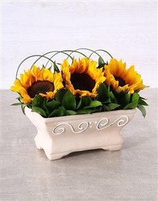 gifts: Windowsill Sunflowers!