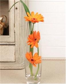 flowers: Staircased Gerberas Petite!