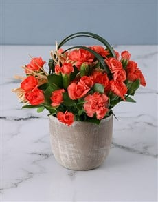flowers: Cheerful Mini Carnations in Pottery Vase!