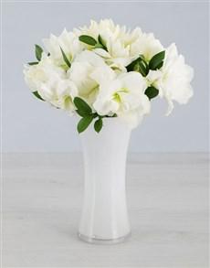 gifts: Cut Amaryllis in White Flair Vase!