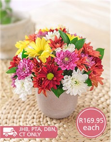 flowers: Daisies in Pottery Gift!