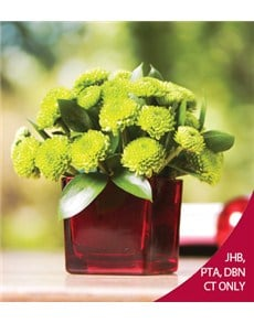 flowers: Green Spray in a Red Square Vase!