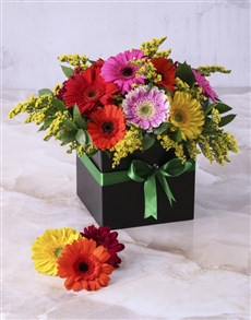 flowers: Mini Gerberas in a Box!