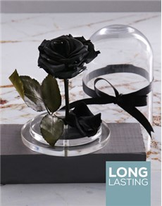 flowers: Tale as Old as Time Preserved Black Rose!