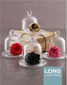 flowers: Small Glass Dome Containing A Preserved Rose!
