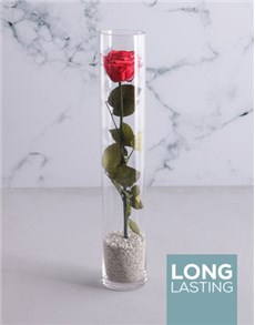 flowers: Rose In A Thin Tall Cylinder!