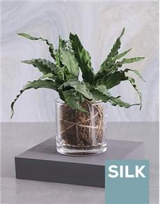 gifts: Silk Asplenium Moss Ball in a Clear Vase!