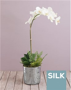 flowers: Silk Phalaenopsis Orchard and Fern!