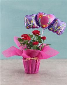 flowers: Rose Bush for Mom!