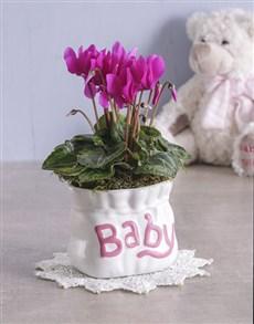 plants: Cyclamen in Baby Pottery!