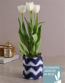 gifts: White Tulip in Royal Blue Fabric Pot Cover!