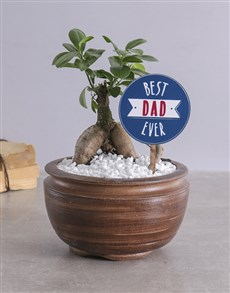 plants: Best Dad Bonsai!